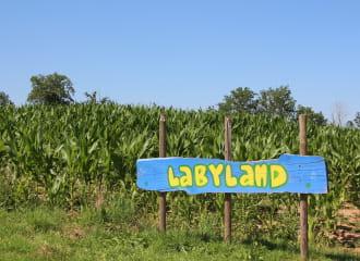 Labyrinthe de maïs géant