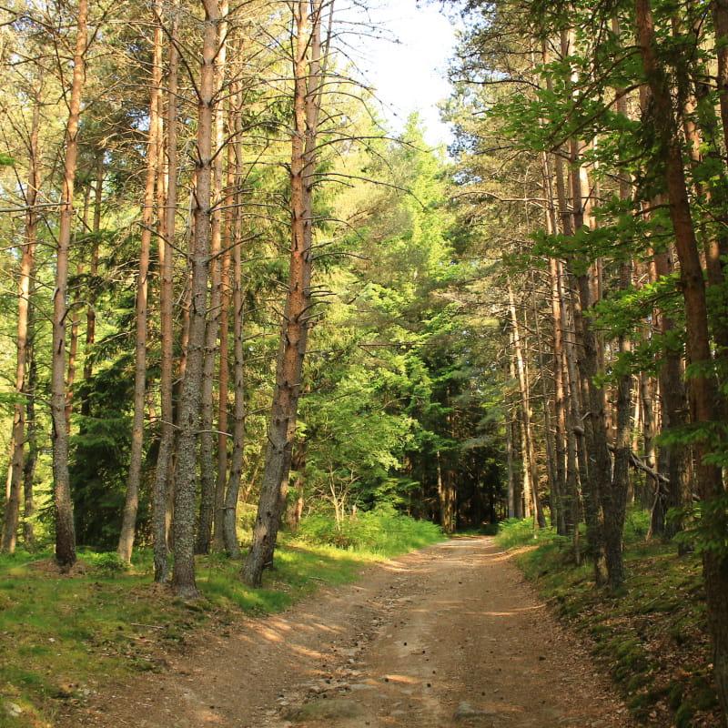Sentier des bois, le Pas de St-Martin