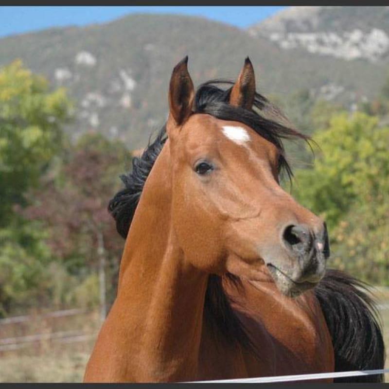 Centre Equestre Bourg d'Oisans