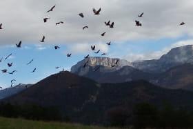 Vol de vautours