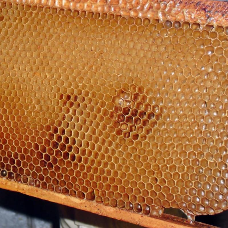 Producteur de miels - Branchet