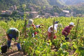 Séjour Randonnée : Vignobles de Saint-Joseph et Condrieu