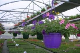 De Dios horticulture