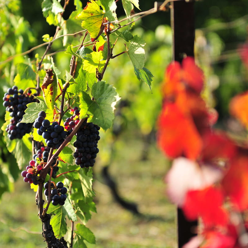 Gilles Persilier - Vins d'Auvergne - La Roche-Blanche