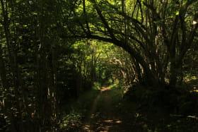 Bois de Leignecq