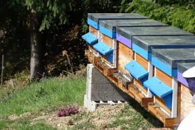 activité sur ruche au printemps
