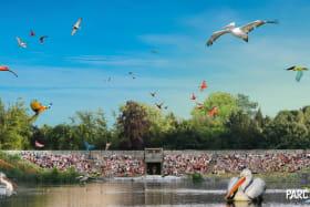 Spectacle d'oiseaux en vol