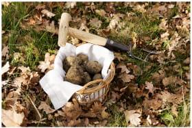 Récolte truffée - Domaine Piallat