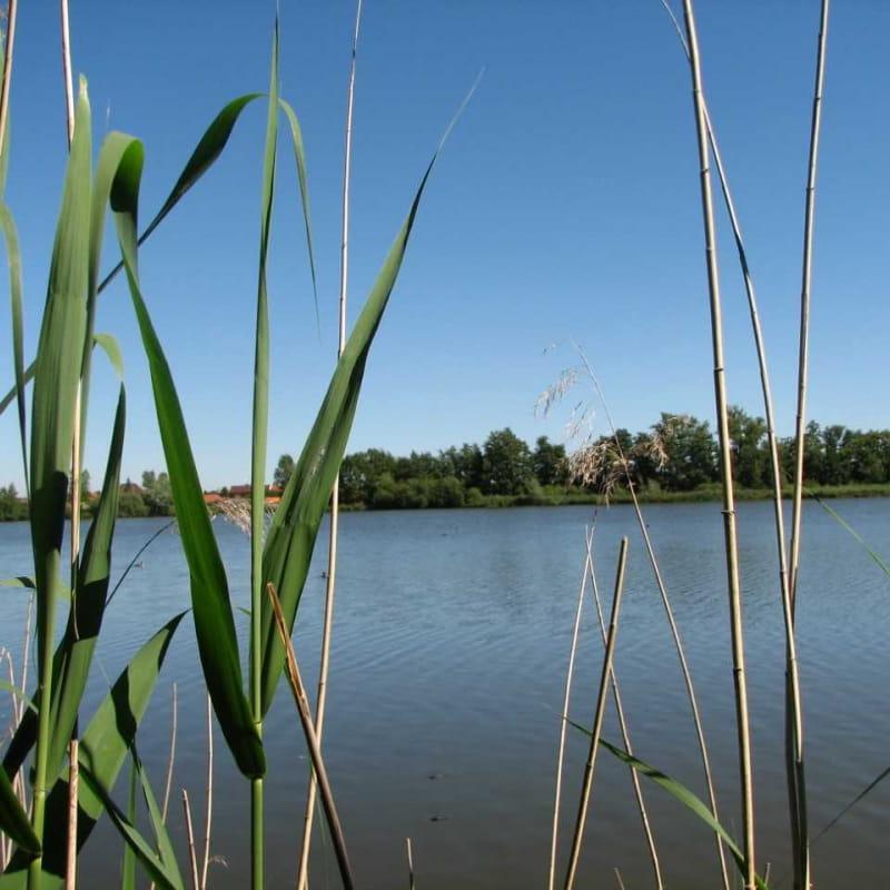L'étang David - A la découverte des bords de Loire