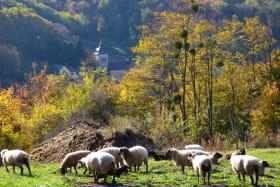 Chèvrerie du Mont Lovet - Earl