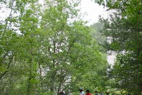 La Forêt d'Esparron à cheval