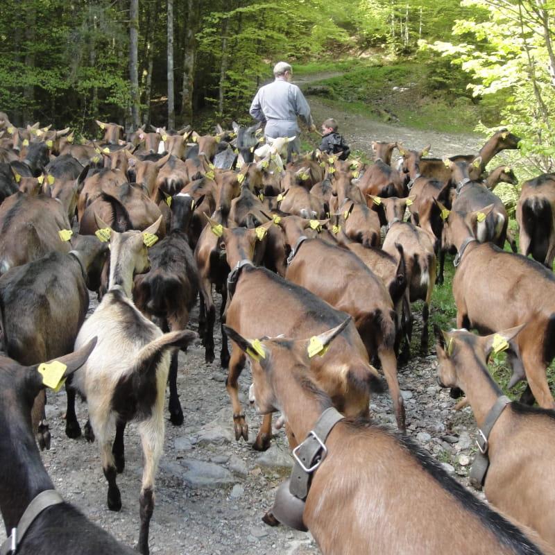 Montée des Chèvres