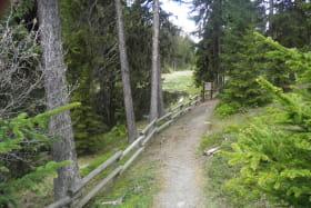 Itinéraire de randonnée : Plan Bois par le Sentier du Lac Noir