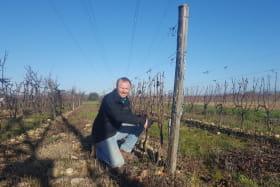 vigne Domaine Lionel Brenier - Epinouze