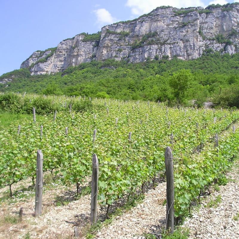 Les vignes des grangeons de l'Albarine