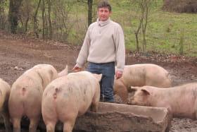 Benoit au milieu de ses Porcs