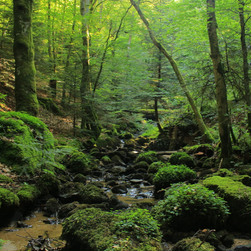 Rocher et mousses dans le ruisseau de Cusson