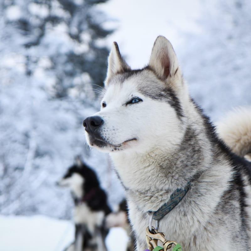 Initiation cani raquettes demi journée