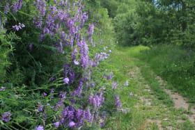 Sentier des Vignes - Bozel