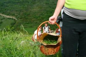 Randonnées pédestres accompagnées avec Ardèche Randonnées