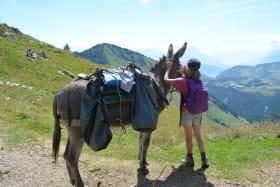 Balade encadrée avec les ânes de Jean-Luc