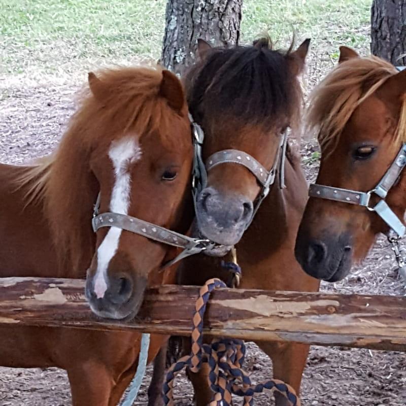 Pony Run-Run