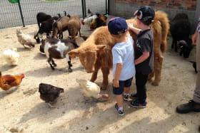 Contact avec les animaux
