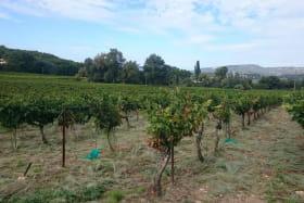 Vignes - Domaine des Rosier
