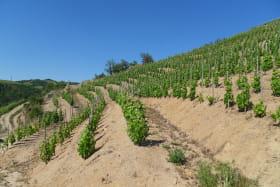 Les vignes en coteau