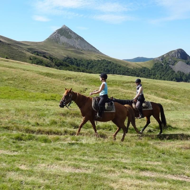 Ferme Equestre Cheval Découverte