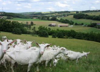 La Chèvre du Bancel