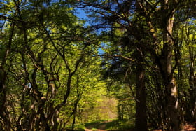 Sentier du Maquis en direction de La Combette