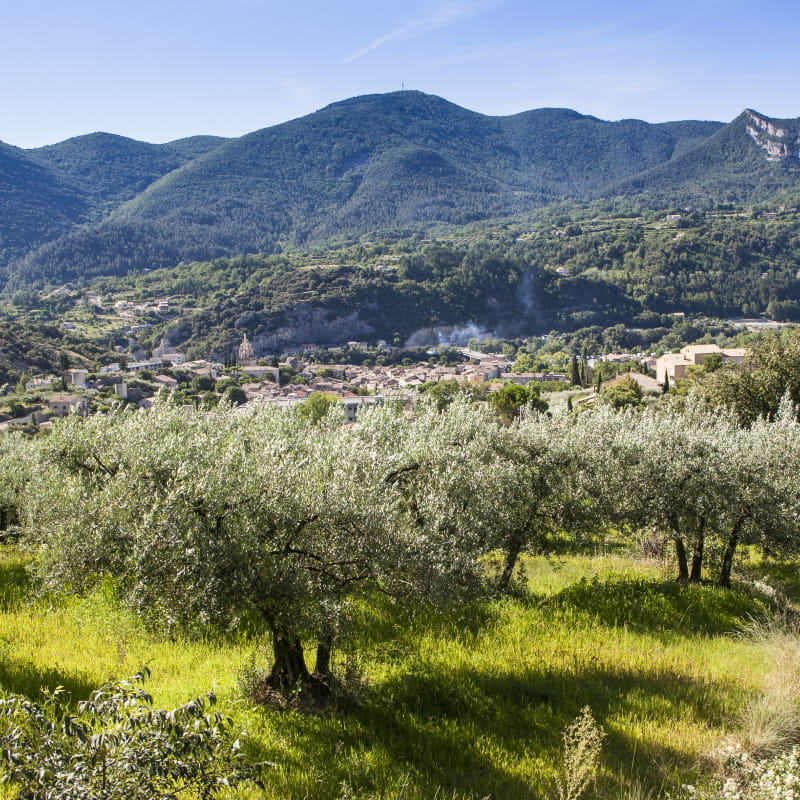 Le pays de l'olive… et des lavandes (n°10)