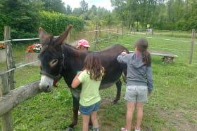 Activités avec les ânes - Ain ânes