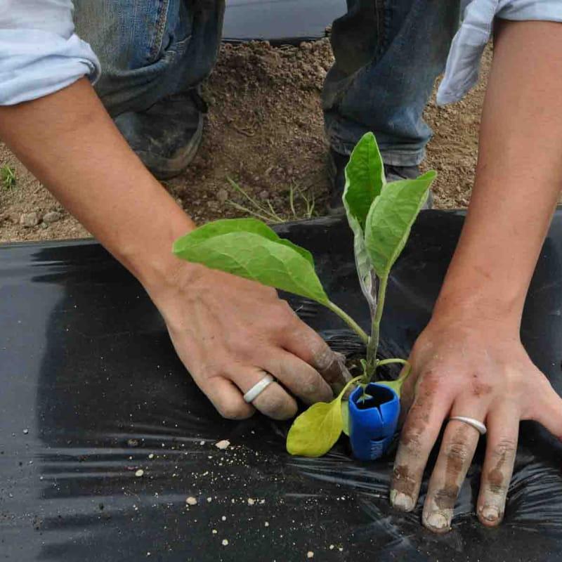 Découverte d'une exploitation maraîchère en agriculture biologique