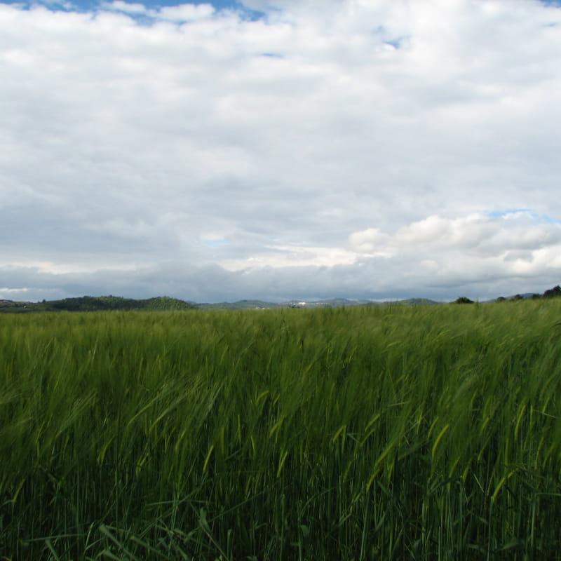 Le sentier des Ayasses et des Groles