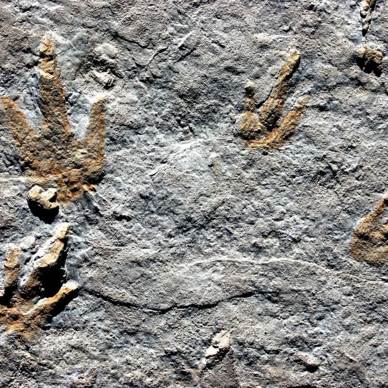 Sur les traces des dinosaures des Monts d'Ardèche