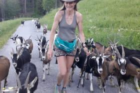 Chèvrerie des Barrettes - Assistez à la traite !