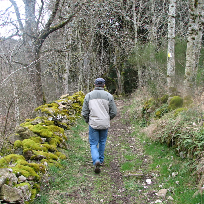 Sentier botanique forestier