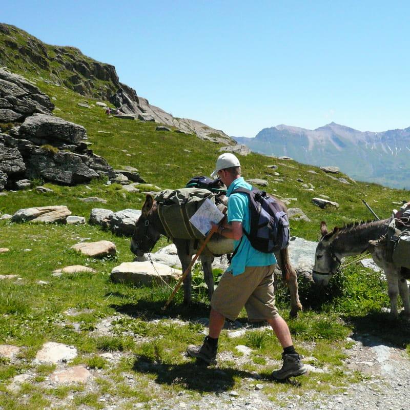 Randonnées avec des ânes de bat