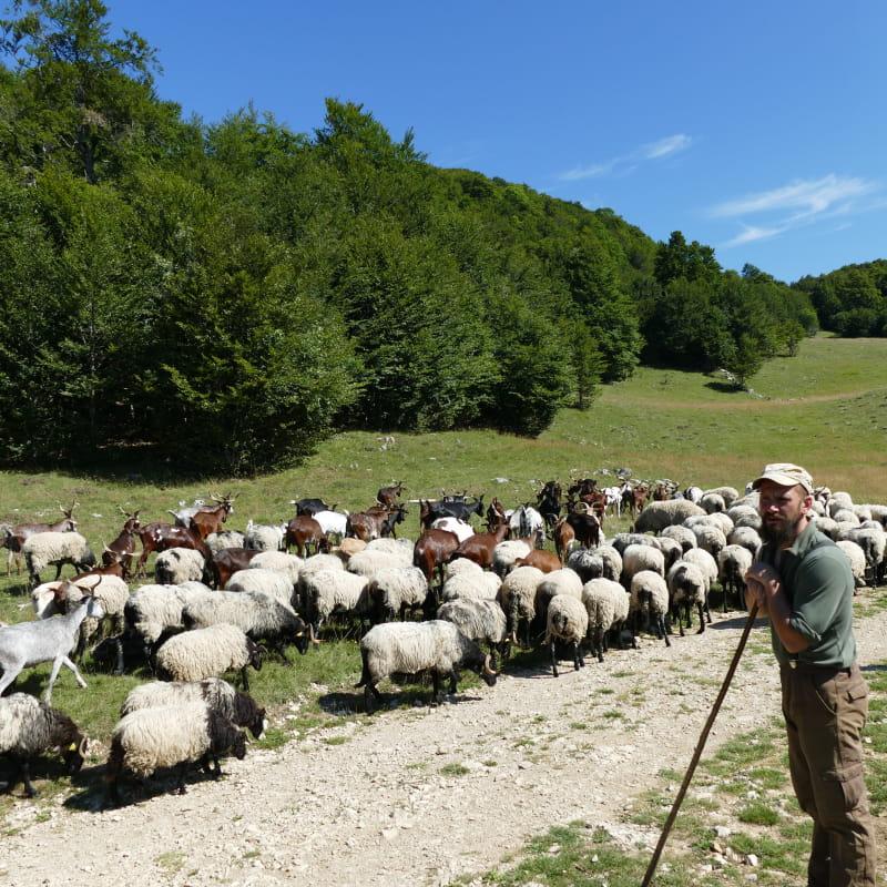 Le troupeau en estive