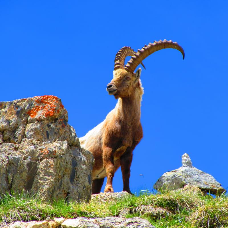 Aloïs Goadard accompagnateur de montagne - vallée de la Plagne