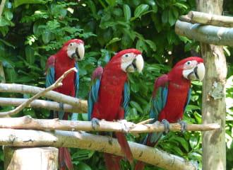 Parc des perroquets