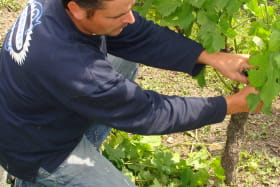 Vin - Cave Benoit Montel - Riom