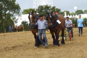 Présentation cheval