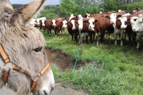 À la Bosse des ânes - randonnées avec des ânes bâtés