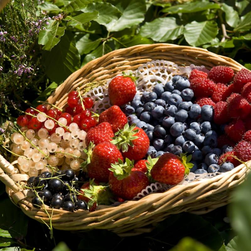 Fruits Rouges des Monts du Velay
