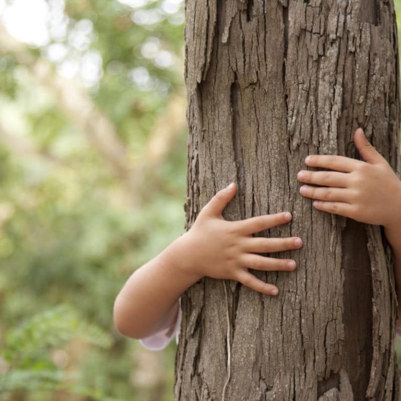 Randonnée et grimpe d'arbre encadrée