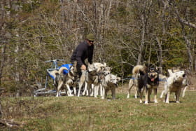 Cani-rando avec Esprit du Nord