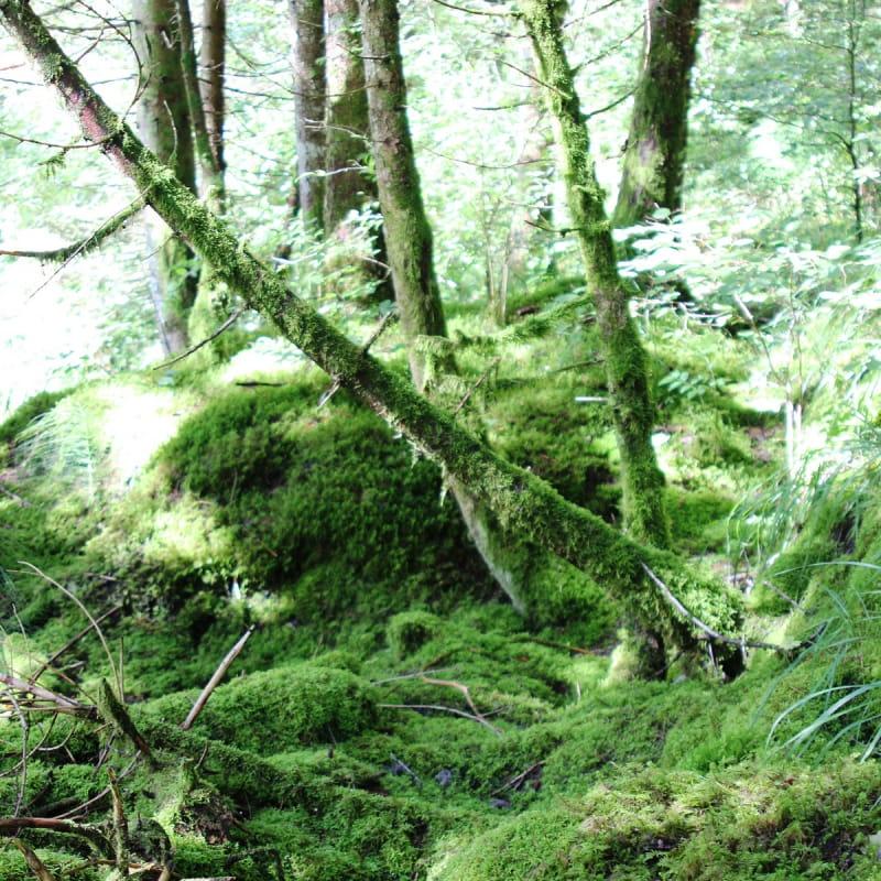 Arbres de la forêt ivre